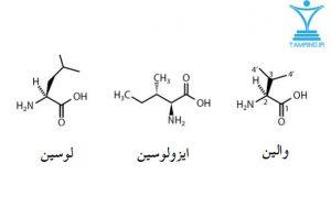 آمینو اسیدهای شاخه ای