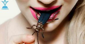 پروتئین حشرات