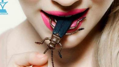 Photo of حشرات پروتئین های آینده هستند