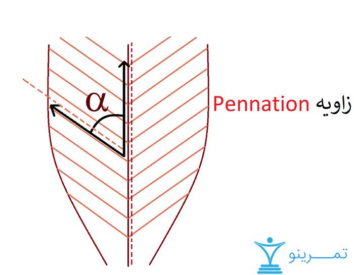 زاویه pennation
