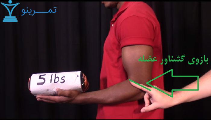 طول بازوی گشتاور عضله