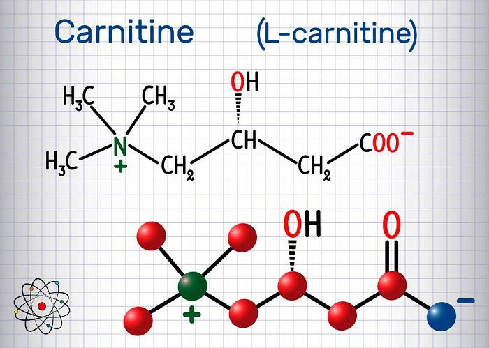 ال کارنیتین