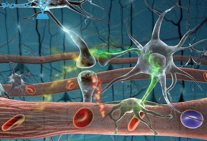 تسلط سیستم عصبی خود مختار