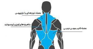 عضلات کمر